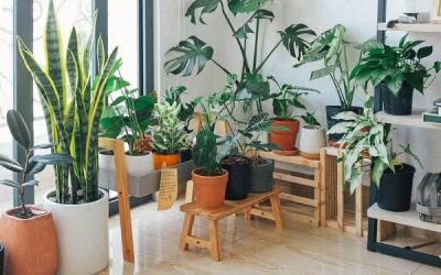 5 Easy Ways On How To Fill Your Room With Plants