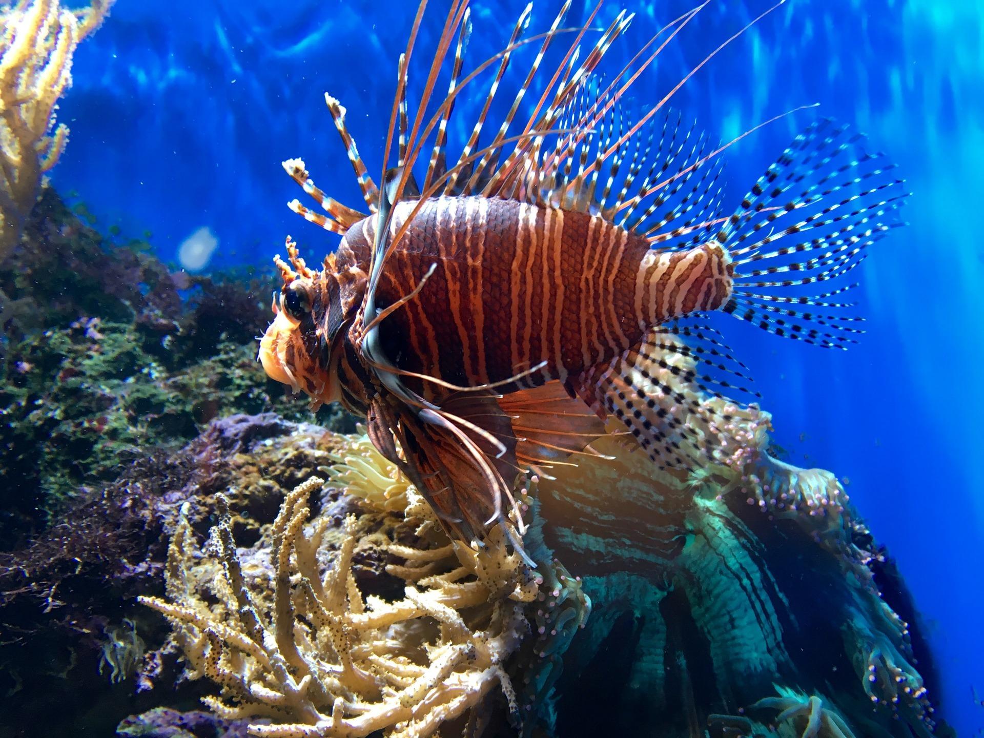Sea Life Aquarium in London